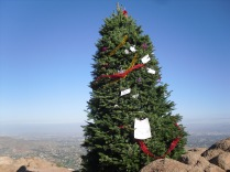 This Christmas tree is at the summit. Another hiker there that day said she saw a couple 20-somethings carrying it up a few days earlier.
