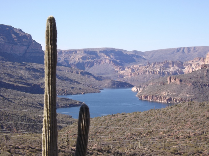 Saguaro cactus on banks of Apache Lake