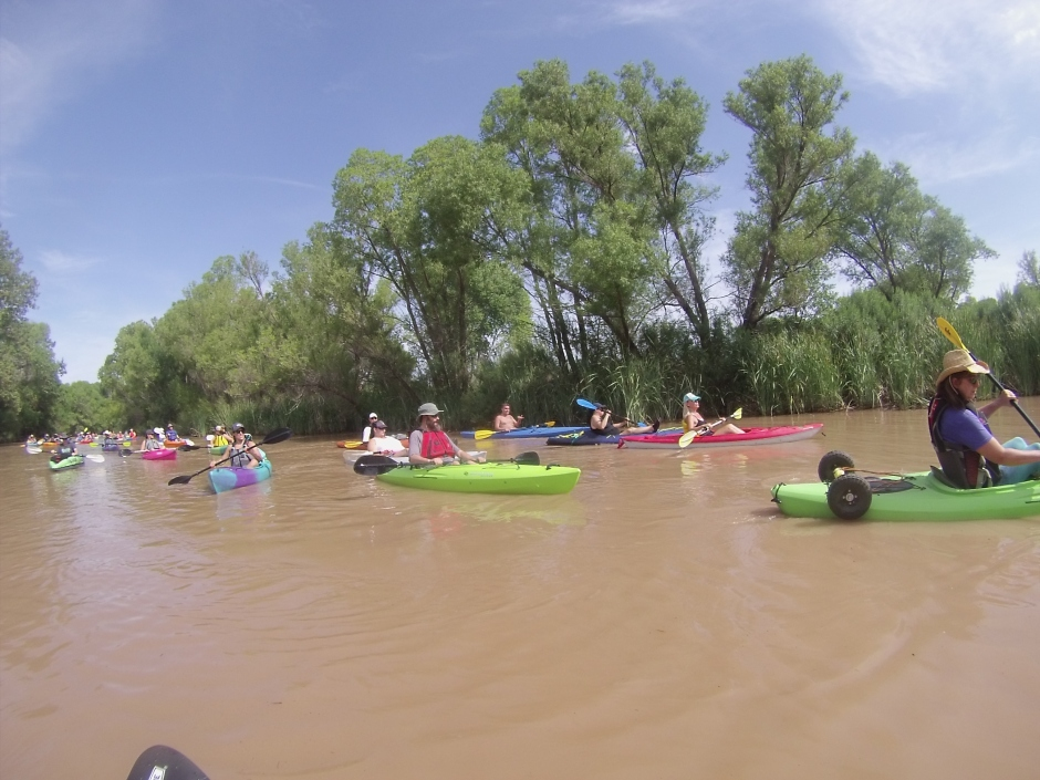 Stream of kayakers on gently flowing river